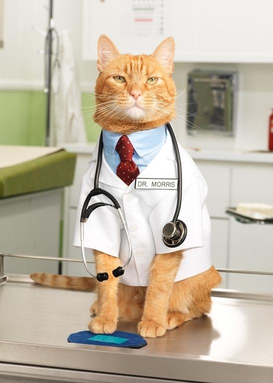 Прикольные медицинские картинки с животными, днем рождения коллеге